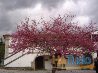 Quinta com Casa Brasonada ideal para turismo