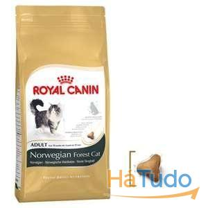 Royal Canin Feline Norwegian Forest Cat \ Gato Bosques da Noruega