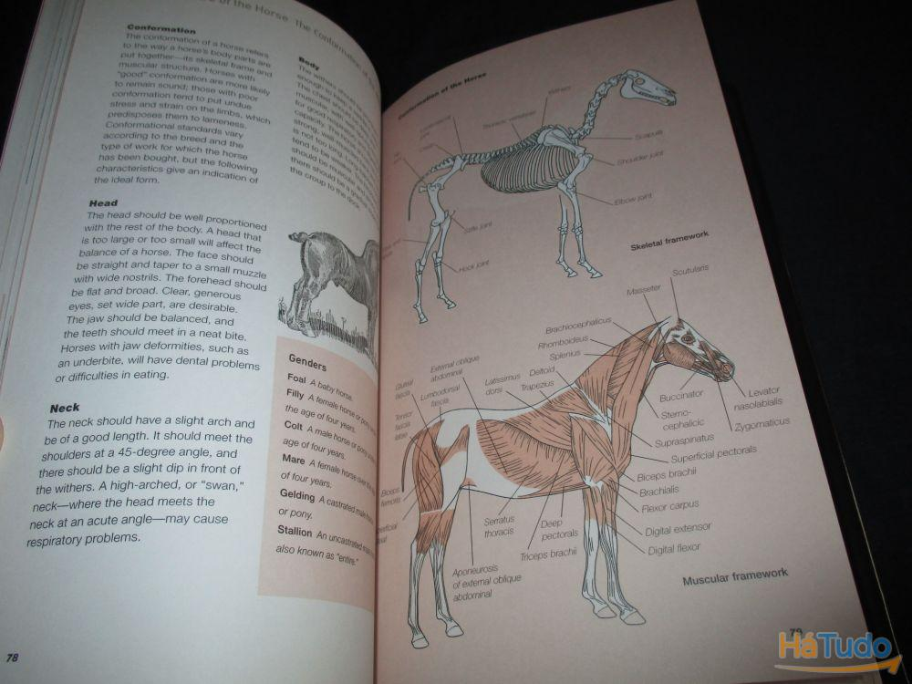 Livro The Horse A Miscellany Of Equine Knowledge Julie Whitaker